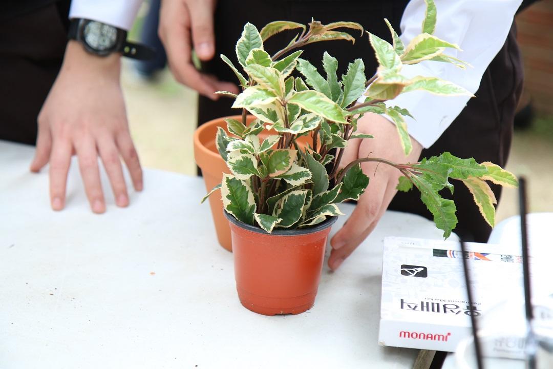 화분에 심어놓은 식물 사진